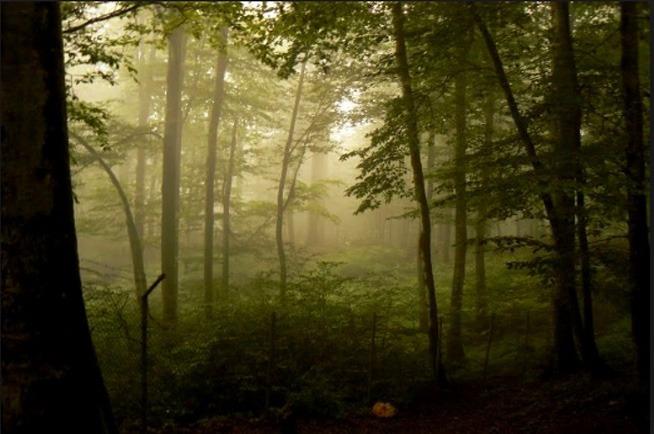 Namak Abrud Forest Park