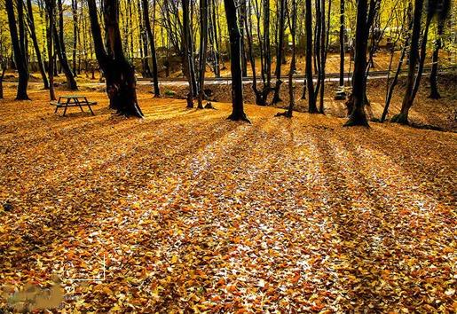 Alangdareh Forest park